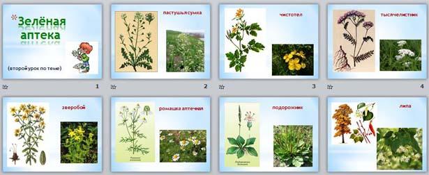 Зеленая аптека для детей в картинках