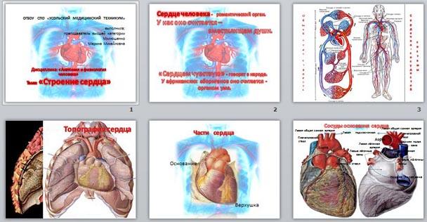 Анатомия и физиология человека 8 класс презентация
