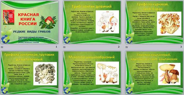 грибы в красной книге россии фото