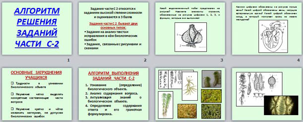 Презентация по биологии Алгоритм решения заданий части С2