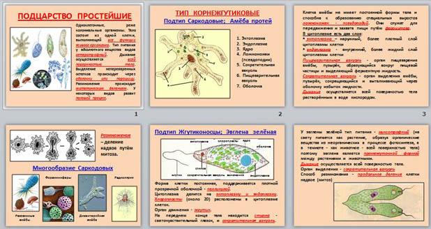 Презентация по биологии Простейшие