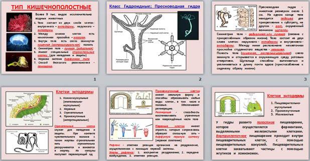 Презентация по биологии Кишечнополостные