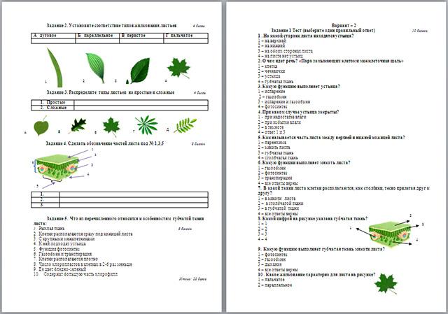 Контрольная работа по биологии по теме Внешнее и внутреннее  Контрольная работа по биологии по теме Внешнее и внутреннее строение листа