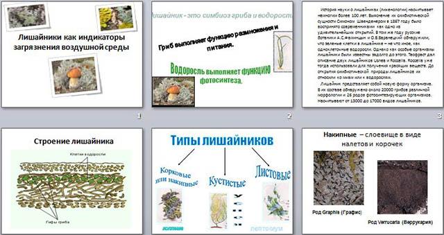 презентация животные индикаторы водные беспозвоночные индикаторы