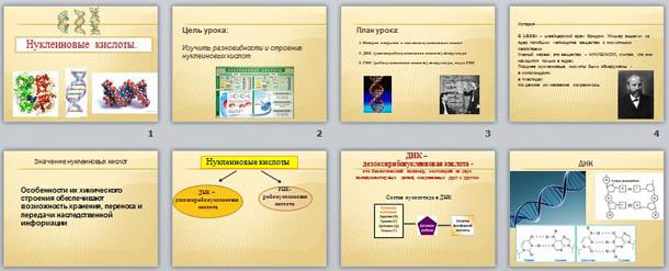Презентация по биологии Нуклеиновые кислоты