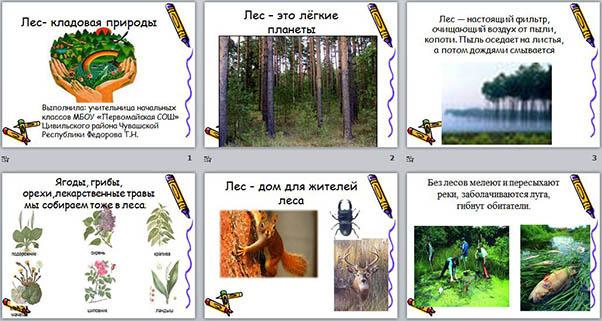Презентация на тему леса в чувашии