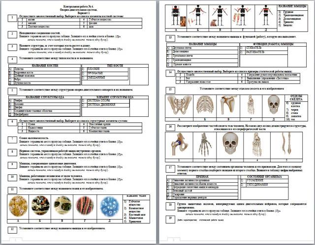 Контрольная Работа По Биологии Опорно Двигательная Система 8 Класс