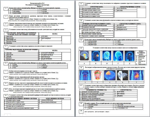 Контрольная работа по биологии по темам Координация и регуляция  Контрольная работа по биологии по темам Координация и регуляция Анализаторы