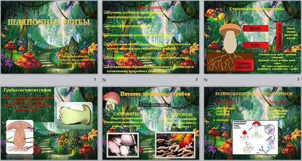 презентация по биологии Шляпочные грибы