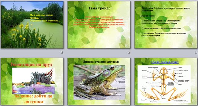 Многообразие земноводных. Хвостатые (тритоны, саламандры) и бесхвостые (лягушки, жабы, квакши, жерлянки) земноводные. Значение земноводных в природе и в жизни человека. Охрана земноводных ( презентация)
