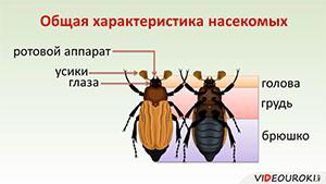 28 общая характеристика насекомых