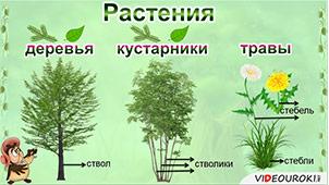 Ленинградская область растения это понятие для детей сразу всю