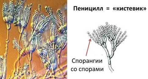 паразиты на руках человека