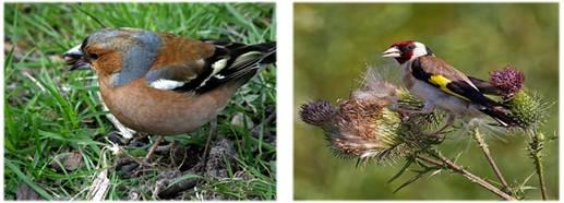 Птицы истребляющие вредителей