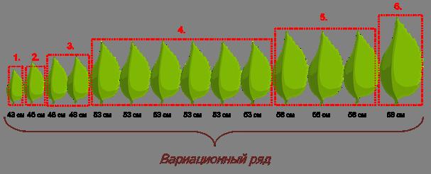 Модификационная изменчивость лаврового листа
