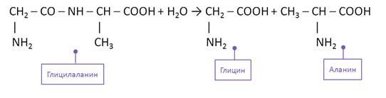 При какой реакции из аминокислот получаются полипептиды пептиды х