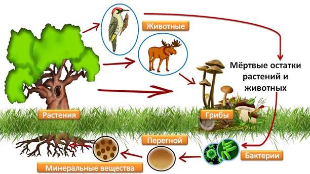 Живые организмы картинки